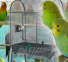 Parakeet Cages - high quality - Parrot Park Bochum