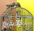 Parrot Cages - high quality - Parrot Park Bochum