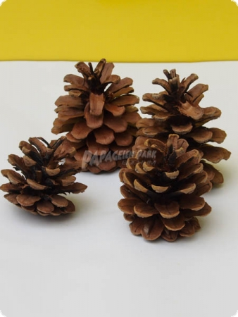 Black pine cones - nature - 5-6 cm - 4 pieces
