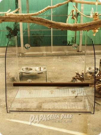 Sch ne aussicht papageien fensterfreisitz for Scha ne nagelmotive