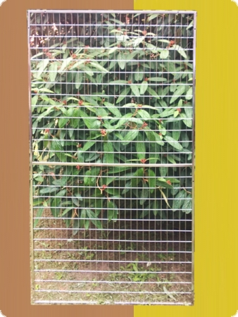 Stainless steel parrot aviary element 100x200