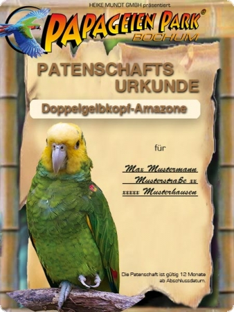 Sponsorship Yellow-headed amazon FLORIAN 12 months