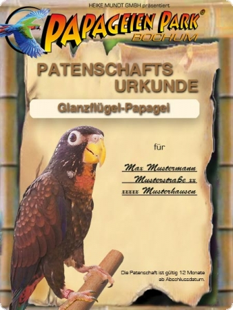 Donation/Sponsorship Bronze-winged parrot ROSWITA 12 months