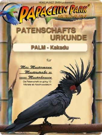 Donation/Sponsorship Palm cockatoo MEPHISTO 12 months