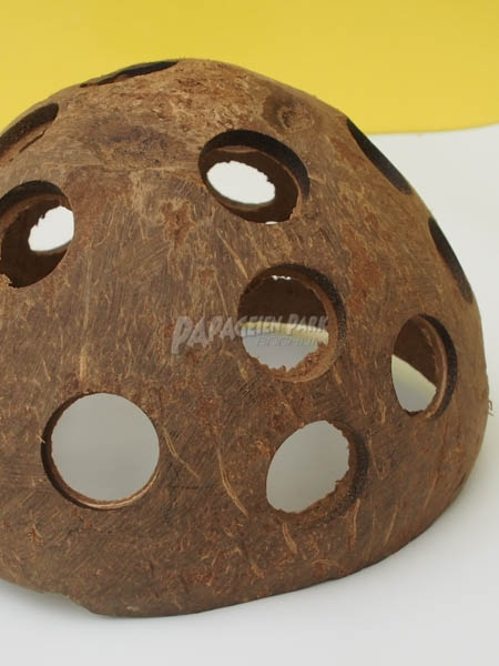 1/2 drilled coconut shell